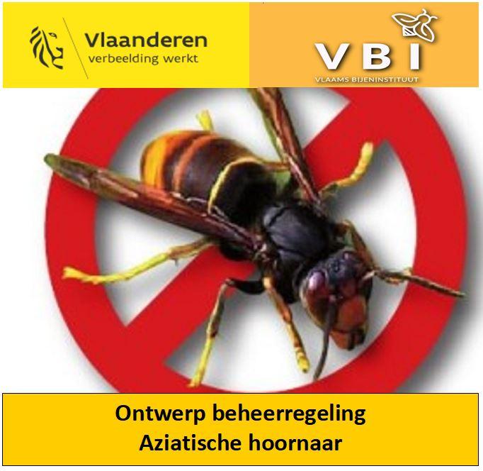 Beheerregeling Aziatische hoornaar
