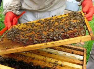 Honingramen