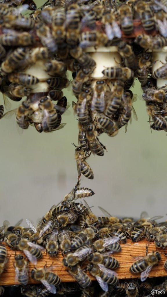 Aangezogen dop met bijen
